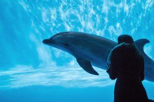 水族館の水槽で泳いでいるイルカ