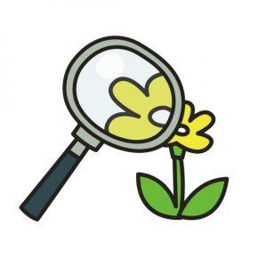 虫眼鏡で植物の観察