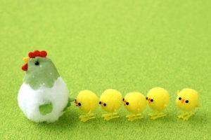 鶏を先頭に、一列に並んでいるひよこたち