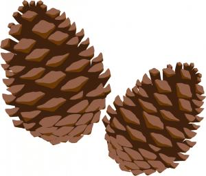 マツの種子であるまつかさ(まつぼっくり)のイラスト