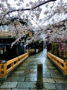 桜が咲いている京都の街並み