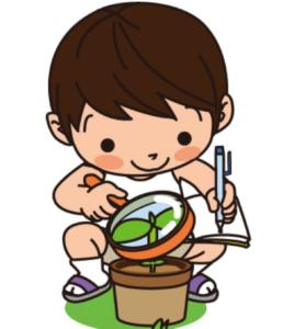 植物を観察している少年のイラスト